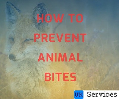 how-to-prevent-animal-bites